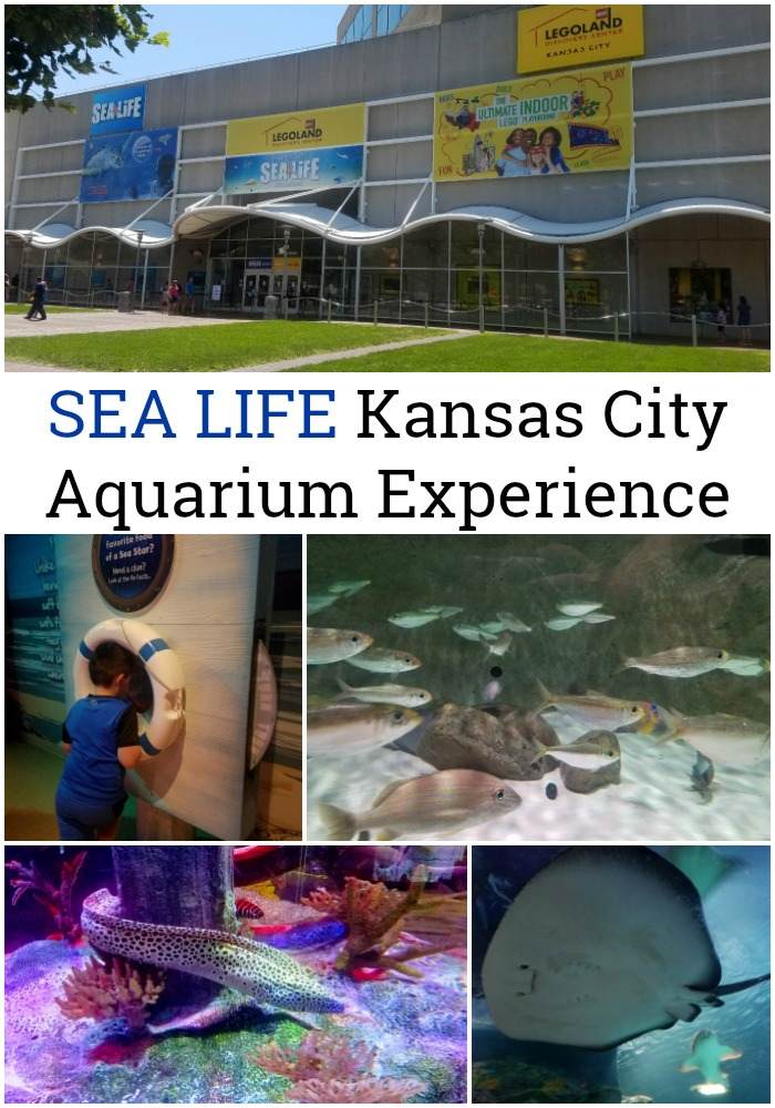 SEA LIFE Kansas City Aquarium Experience