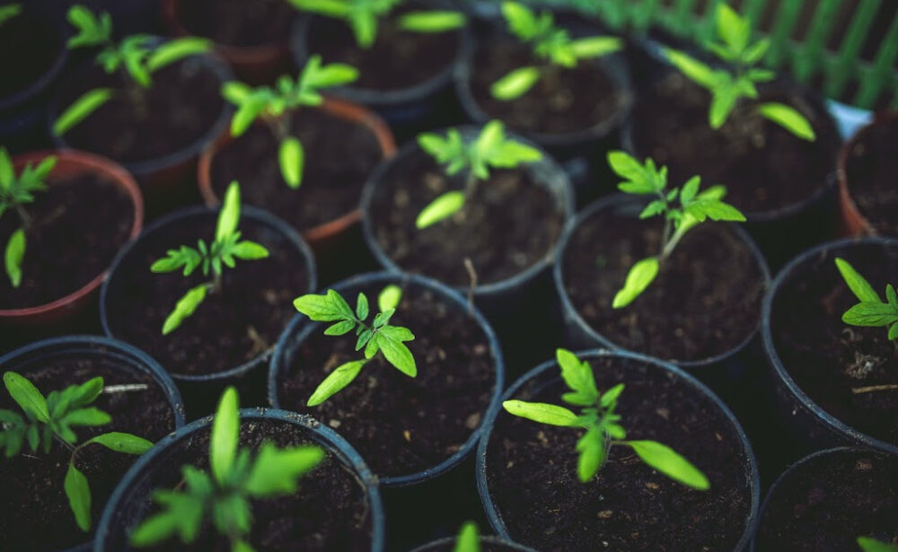Easy Ways To Start An Inexpensive Garden