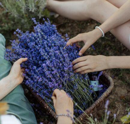 8 of the Tastiest Edible Flowers