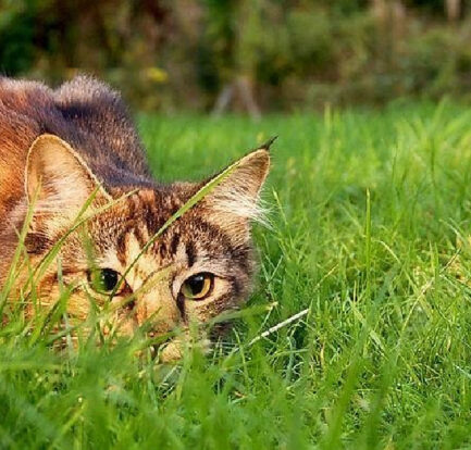 Energetic Cat Breeds for Your Home